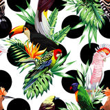 Tropical birds and palm leaves pattern, black rounds background Stock Photography