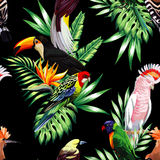 Tropical birds and palm leaves seamless black background Stock Photos