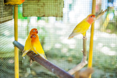 Tropical birds in the Philippines Royalty Free Stock Images