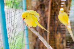 Tropical birds in the Philippines. Tropical birds concept Royalty Free Stock Photography