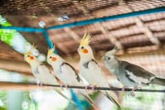 Tropical birds in the Philippines Royalty Free Stock Photo