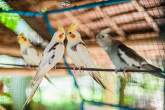 Tropical birds in the Philippines Stock Photo