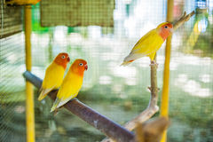 Tropical birds in the Philippines Royalty Free Stock Photos