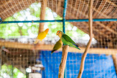 Tropical birds in the Philippines. Tropical birds concept Royalty Free Stock Images