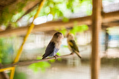 Tropical birds in the Philippines Stock Photography