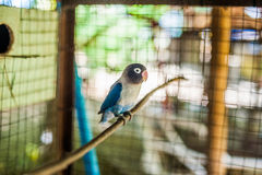 Tropical birds in the Philippines Stock Images