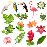 Tropical birds and plants pictograms set Stock Image