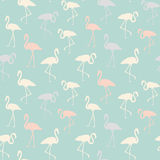Tropical birds seamless pattern. Royalty Free Stock Photography