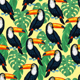 Tropical birds seamless pattern with toucans and Royalty Free Stock Photography