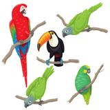 Tropical  Birds Set. Vivid tropical birds set. Green parrots, red-and-green macaw and toucan sitting on branches  on white background. Vector flat illustration Royalty Free Stock Image