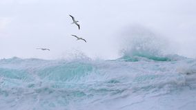 Tropical birds soar above the waves. Winter storm surf thunders shoreward in huge walls of whitewater, while tropical birds ride the spindrift.  Giant surfing Stock Images