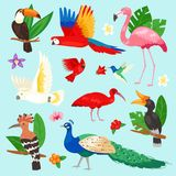 Tropical birds vector exotic parrot or flamingo and peacock with palm leaves illustration set of fashion birdie ibis or. Tropical birds vector exotic parrot Stock Photos