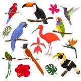 Tropical birds vector exotic parrot toucan and hummingbird with palm leaves illustration set of fashion birdie ibis or. Hornbill in flowering tropics isolated Stock Photography