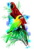 Tropical birds. (Vector) Royalty Free Stock Photo