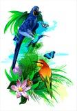Tropical birds. (Vector) Stock Photography