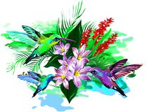 Tropical birds. (Vector) Stock Image