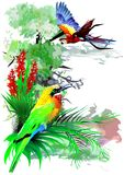 Tropical birds. (Vector) Stock Photography