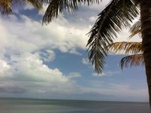 Tropical bliss. Quiet beach under a palm tree Stock Photography
