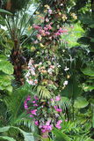 Tropical blooms up the tree trunk Royalty Free Stock Image