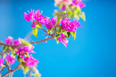 Tropical blossom Royalty Free Stock Images