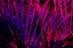 Tropical blurred leaf forest glow in the black light background. High contrast.  royalty free stock photography
