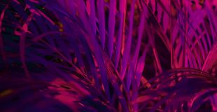 Tropical blurred leaf forest glow in the black light background. High contrast.  royalty free stock photo