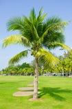 Tropical bonito em Tailândia Imagem de Stock Royalty Free