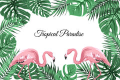 Tropical border frame green leaves pink flamingos Royalty Free Stock Photography