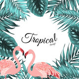 Tropical border frame jungle leaves flamingo birds. Exotic tropical design border frame template. Turquoise blue green jungle palm tree leaves. Pink flamingo Royalty Free Stock Images