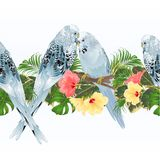 Tropical border seamless background blue pet parakeets Budgerigars and hibiscus vintage vector Illustration for use in interior de stock illustration