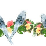 Tropical border seamless background Budgerigar, blue pet parakeet and various hibiscus vector Illustration for use in interior de Stock Photos