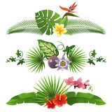 Tropical borders vector illustration