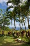 A tropical botanical garden. A botanical garden in Hawaii royalty free stock photo