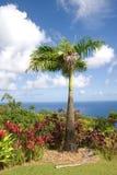 A tropical botanical garden. A botanical garden in Hawaii stock photography