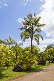 Tropical Botanical Garden in Funchal, Madeira island, Portugal Stock Photo