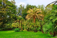 Tropical Botanical Garden Landscape In Summertime. Tropical Botanical Garden Or Forest Or Park Landscape  In Summertime, Russia, Sochi Stock Photos