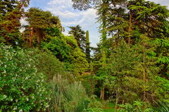 Tropical Botanical Garden Landscape In Summertime Stock Photography