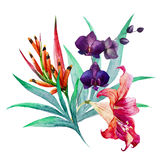 Tropical bouquet. Beautiful vector image with nice watercolor tropical bouquet Royalty Free Stock Photos