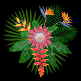 Tropical Bouquet Composition with Protea Royalty Free Stock Photography
