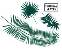 Tropical branches, leaves on white background, palm tree leaves isolated. Vector tropical palm leaves, jungle leaves set isolated on white background Royalty Free Stock Photo