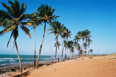 Tropical Brazilian Beach. Tropical Beach of Lagoinha, Ceara, Brazil Royalty Free Stock Photos