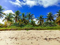 Tropical Brazilian Beach on Summer royalty free stock photography