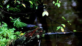 Tropical brook. View of the tropical brook in summer loop stock video footage