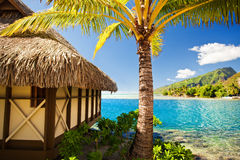 Tropical bungalow and palm tree Royalty Free Stock Photography