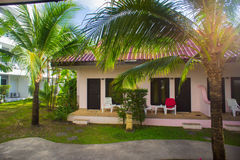 Tropical bungalow and palm tree Stock Photos