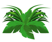 Tropical bush royalty free stock image