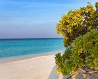 Tropical bush on the bank of the azure sea. Royalty Free Stock Image