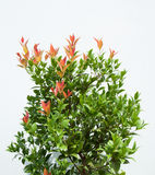 Tropical bush Stock Images
