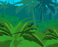 Tropical bushes against jungle Royalty Free Stock Photography