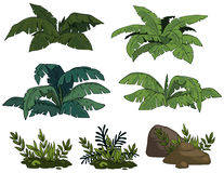 Tropical bushes Stock Images